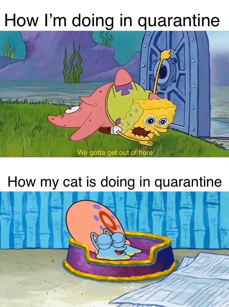 Spongebob Memes On Twitter Funny Spongebob Memes Spongebob Funny Really Funny Memes