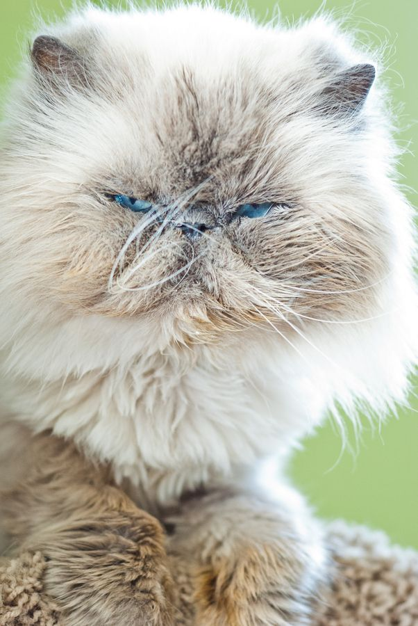 Blue-Eyed Beauty by Stella K, via 500px