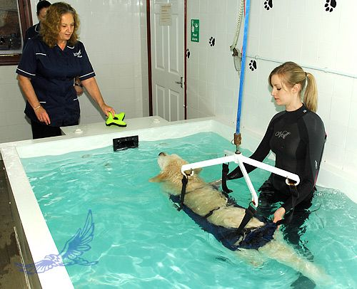 Gallery Hawksmoor Hydrotherapy Pet Hotel Dog Hotel Pet Clinic