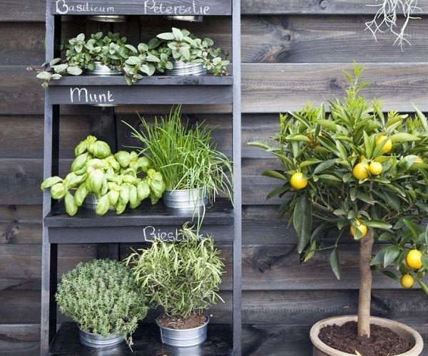Bon Small Herb Garden Design Deas Vertical Garden DIY Ladder