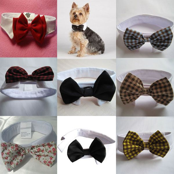 Great Necktie Bow Adorable Dog - ed4608ae2ed1d3d13abf46e229b6846b  Pictures_949617  .jpg