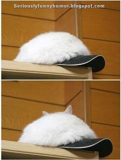 #Cat Hat Camouflage