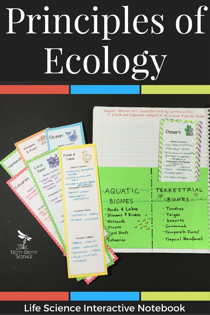 worksheet Principles Of Ecology Worksheet Answers principles of ecology life science interactive notebook the o include following concepts and energy flow in