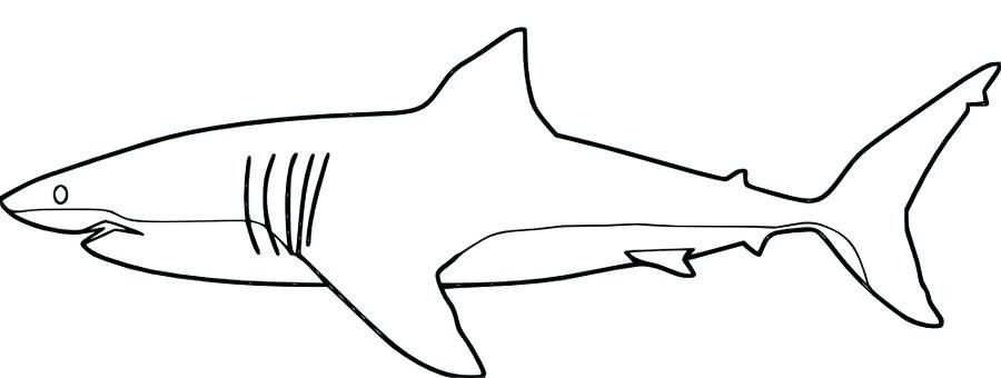 hai malvorlage  shark coloring pages coloring pages
