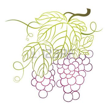Feuille de vignes raisins avec feuilles logo vincent feuille de vigne dessin feuille et vigne - Feuille de vigne dessin ...