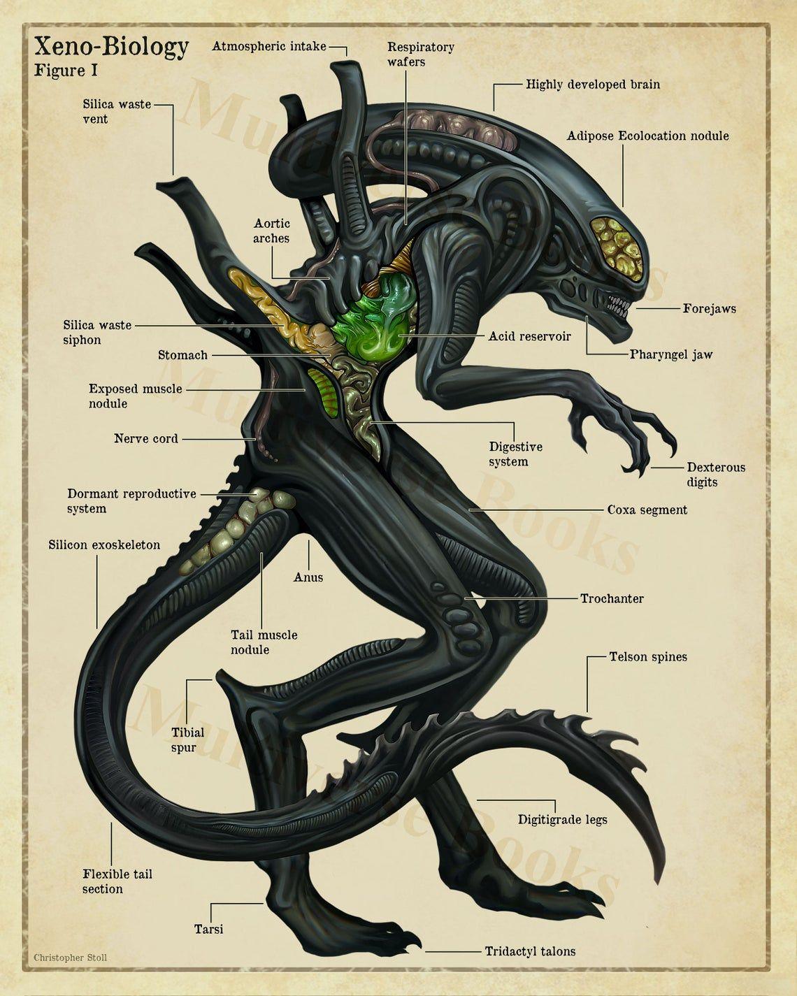 Xenomorph Anatomy Poster Alien Inspired Scientific Wall Art Etsy Aliens Movie Art Xenomorph Predator Alien Art