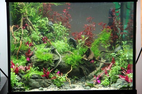 Colorfull par Swee. #aquascaping #aquarium #fishtank