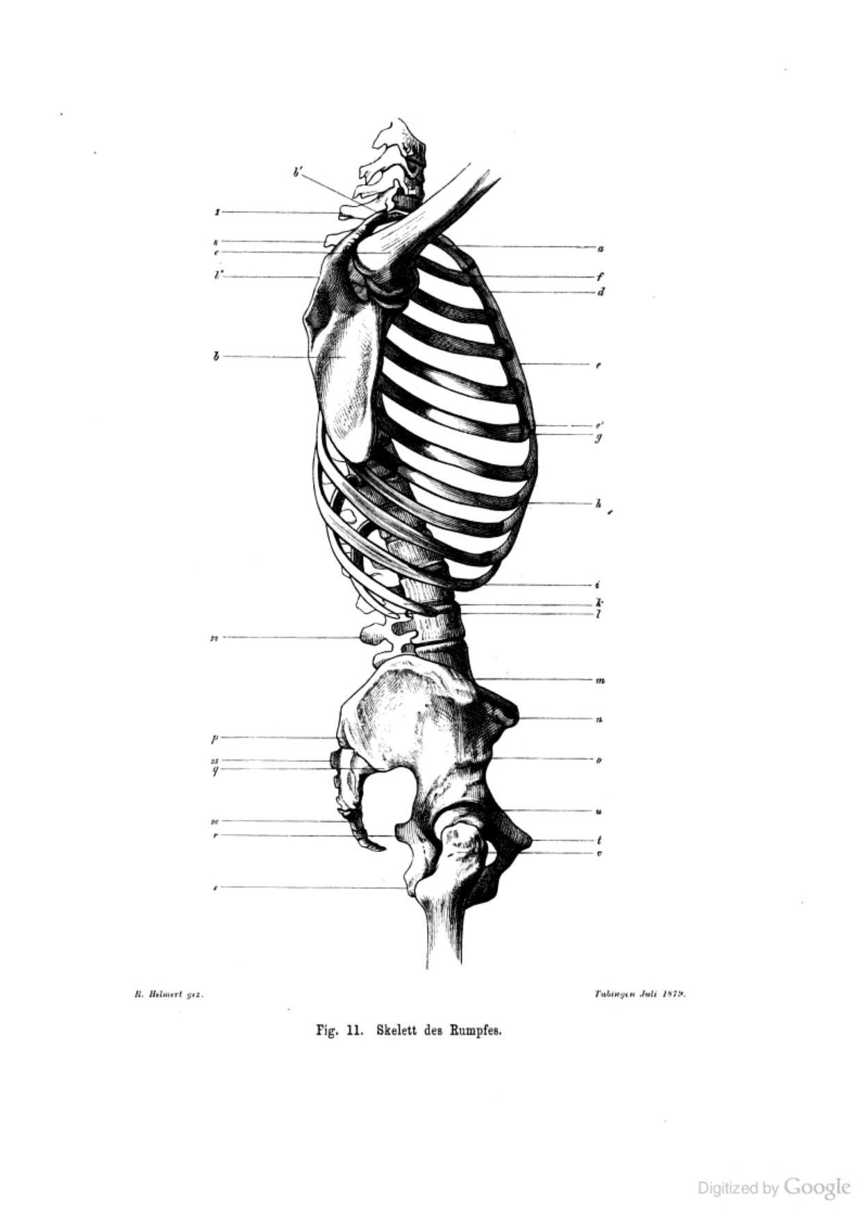 Großzügig Anatomie Referenzen Für Künstler Galerie - Anatomie Ideen ...