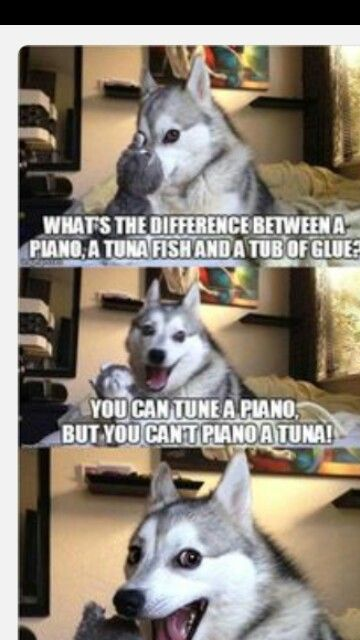 Pin By Lyndee Mathis On Funny Pictures Dog Puns Dog Jokes Bad