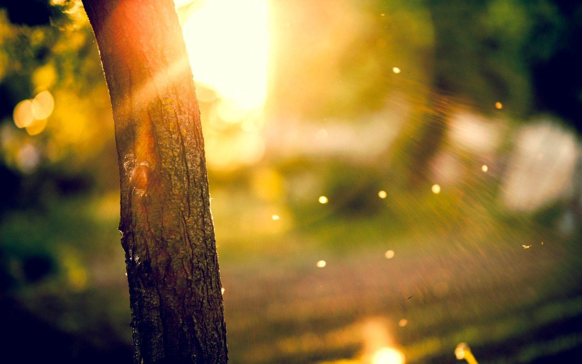 Background Hd Blur Image Close Up Tree Trunk Blur Image Blurred Background Bokeh Background