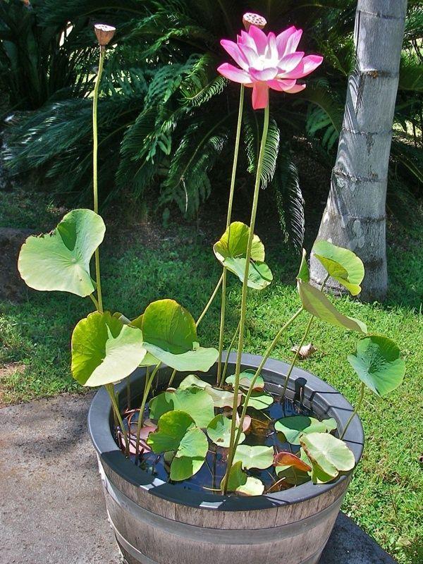 28 ไอเด ย อ างบ วเล กสวยๆ สวยๆ พร อมหล กฮวงจ ยเล กๆ Ihome108 Container Water Gardens Small Water Gardens Garden Pond Design