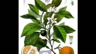 L'olio essenziale di PETIT GRAIN, via YouTube.