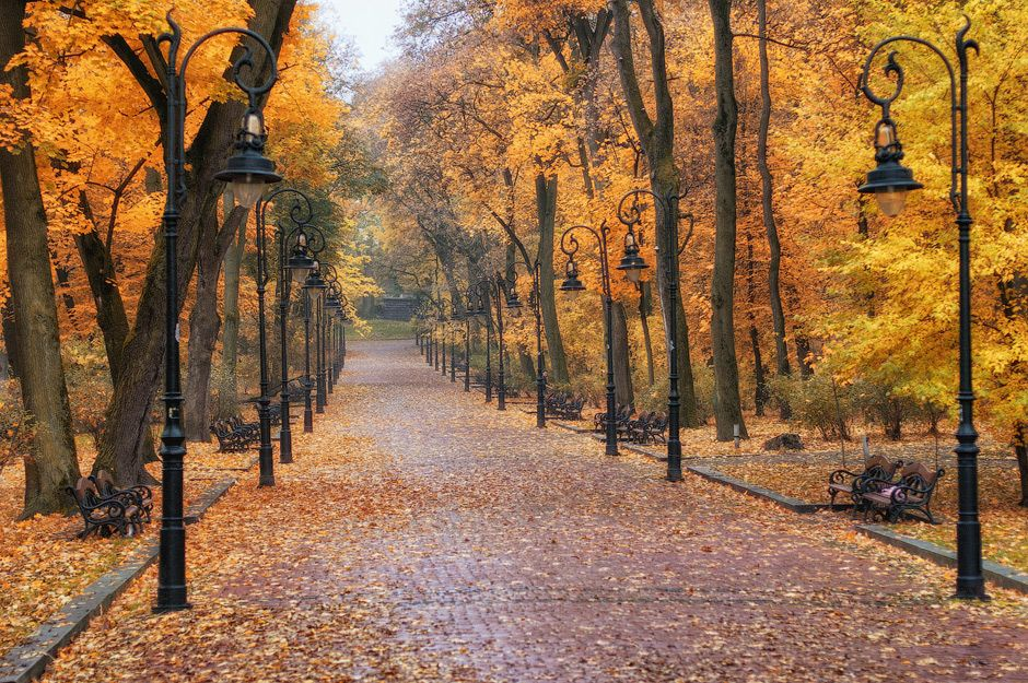 Ternopil Ukraine Fall Pictures Autumn Leaves Wallpaper