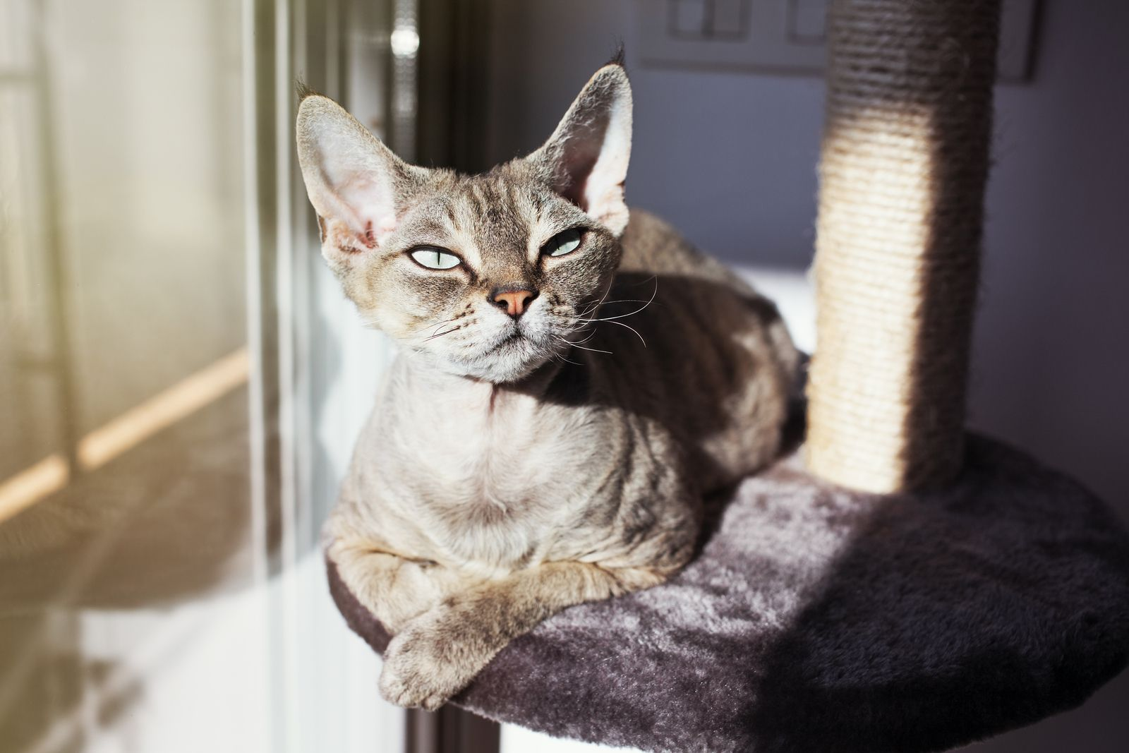 Steps to Take After Your Cat Gets Stung Cats, Pets