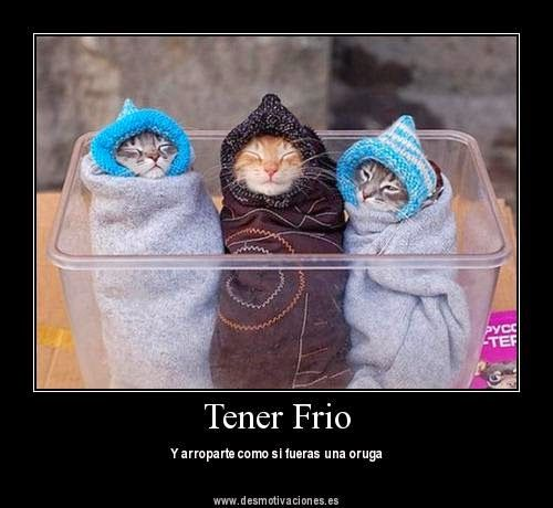 Hace Frio Google Search Cat Memes Funny Kittens Funny Cat Memes Kittens Funny