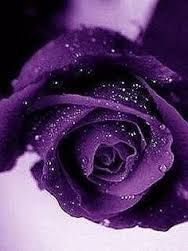 Image result for beautiful purple romantic flowers