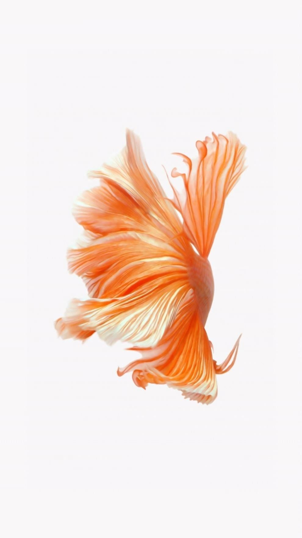 Elegant iPhone 6s original Wallpaper Fish #fondecrannoel