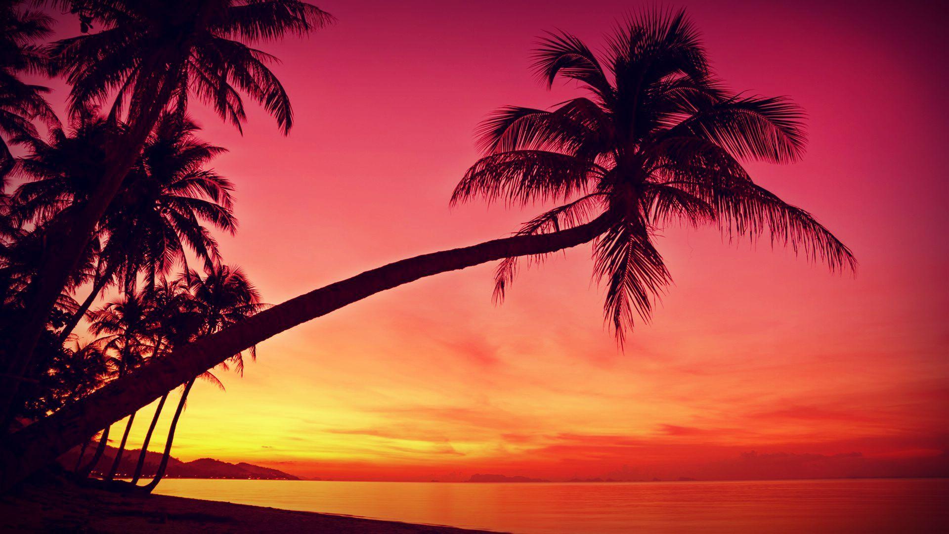 HD Tropical, Sunset, Palm Trees, Silhouette, Beach