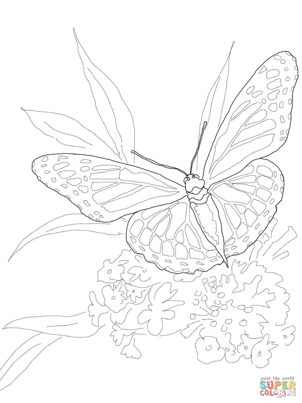 Brilliant Image Of Monarch Butterfly Coloring Page Davemelillo Com Butterfly Coloring Page Coloring Pages Cartoon Butterfly [ 1600 x 1200 Pixel ]