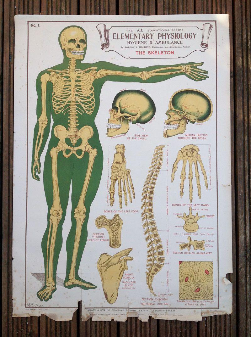 Ausgezeichnet Vintage Anatomie Charts Ideen - Menschliche Anatomie ...