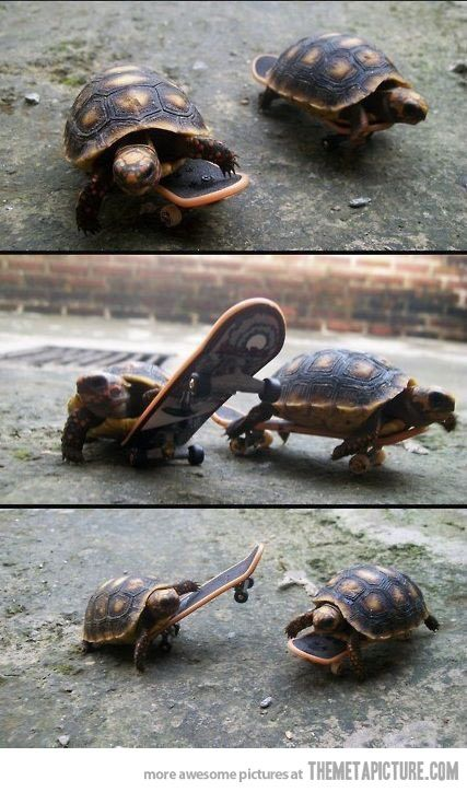 silly turtles