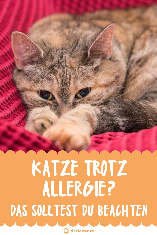 Katze Trotz Allergie Halten Das Solltest Du Beachten Katzen Tier Fakten Haustiere