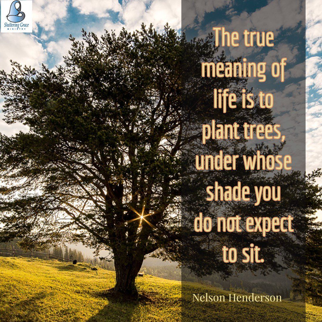 The True Meaning Of Life Is To Plant Trees Under Whose Shade You