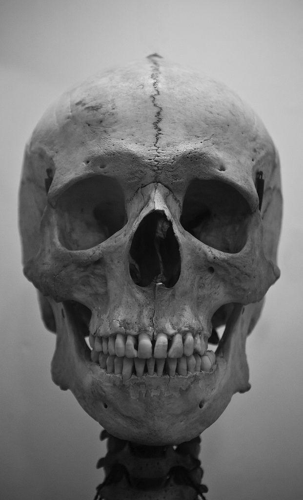 In the Mirror | Calaveras, Anatomía y Anatomía humana