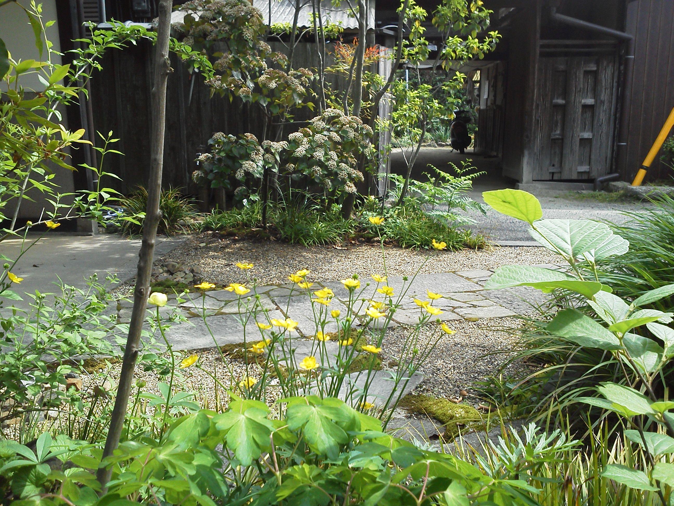 雑木と野草の庭