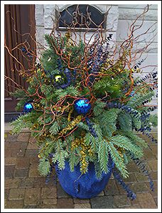 Plant Parenting - Winter outdoor planters, container gardening