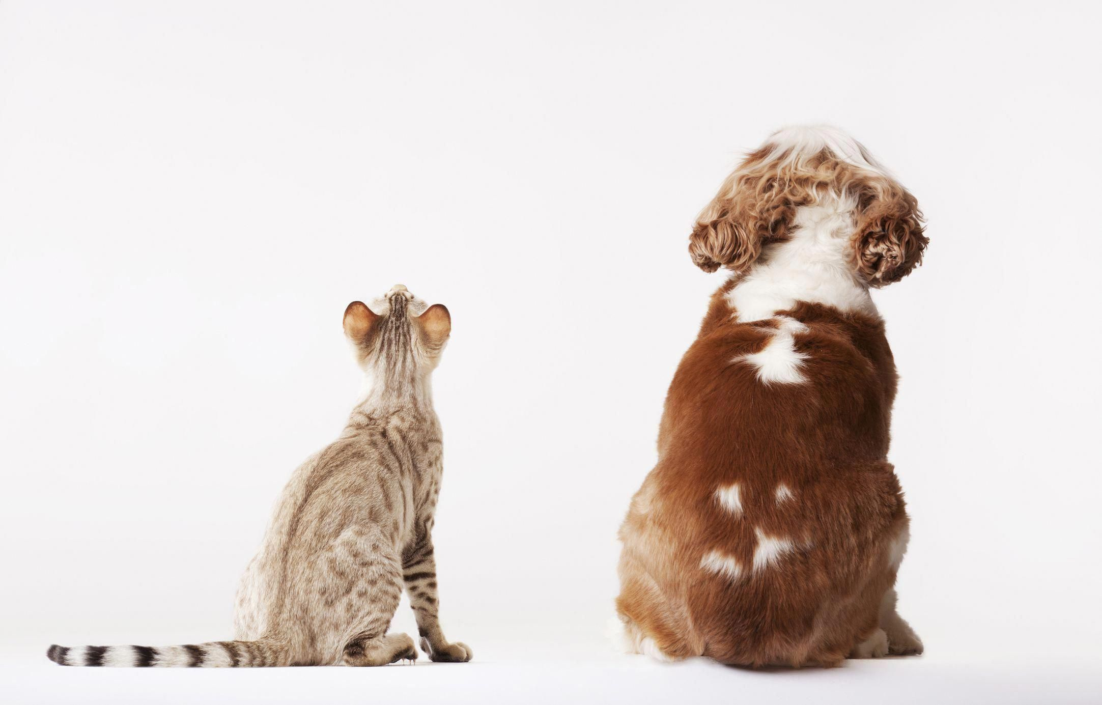 10 Pet Insurance Questions to Help You Understand Coverage ...