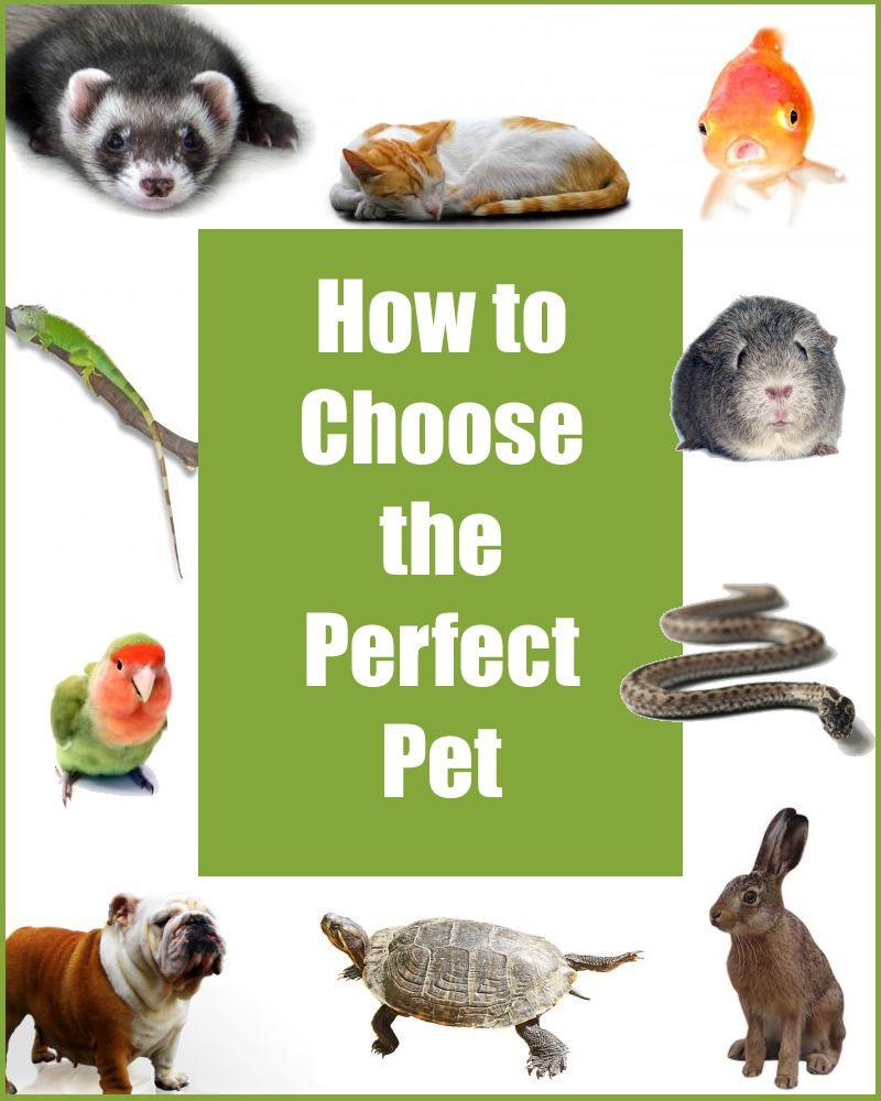 Animal Hospital, Pet Clinic