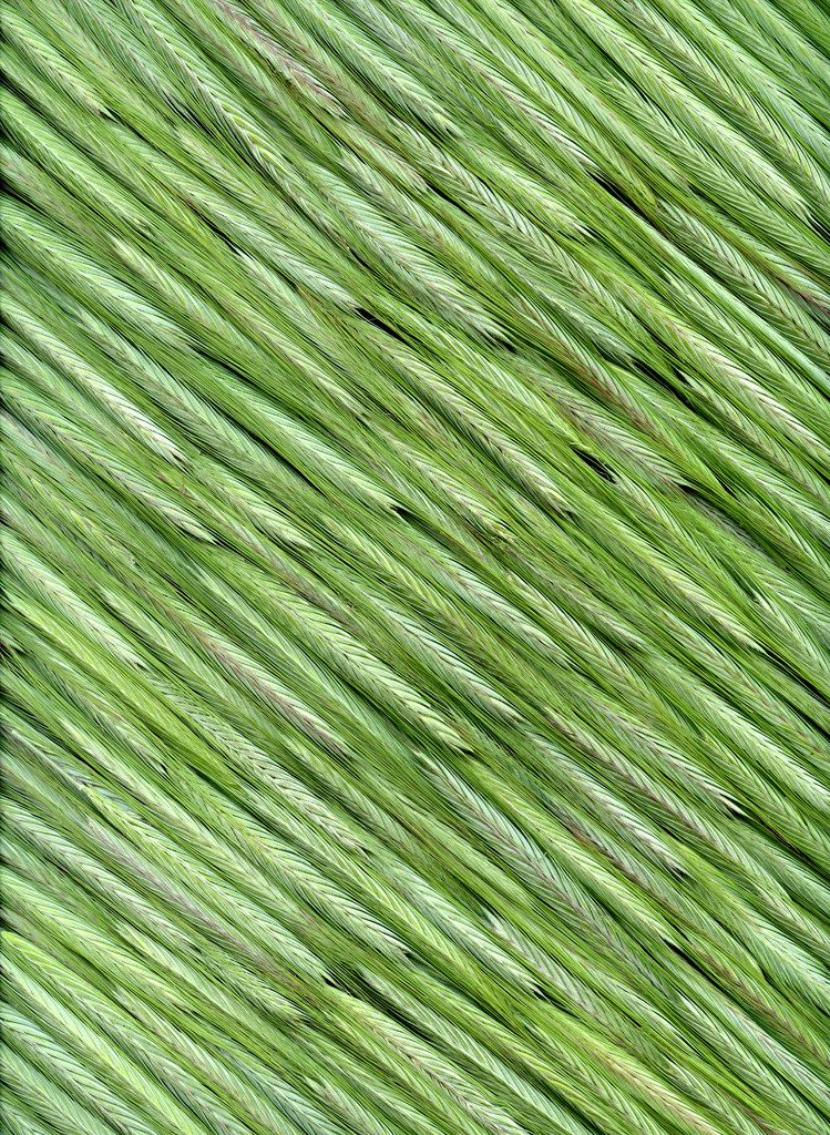 43944 Secale cereale Green, Shades of green, Green colors