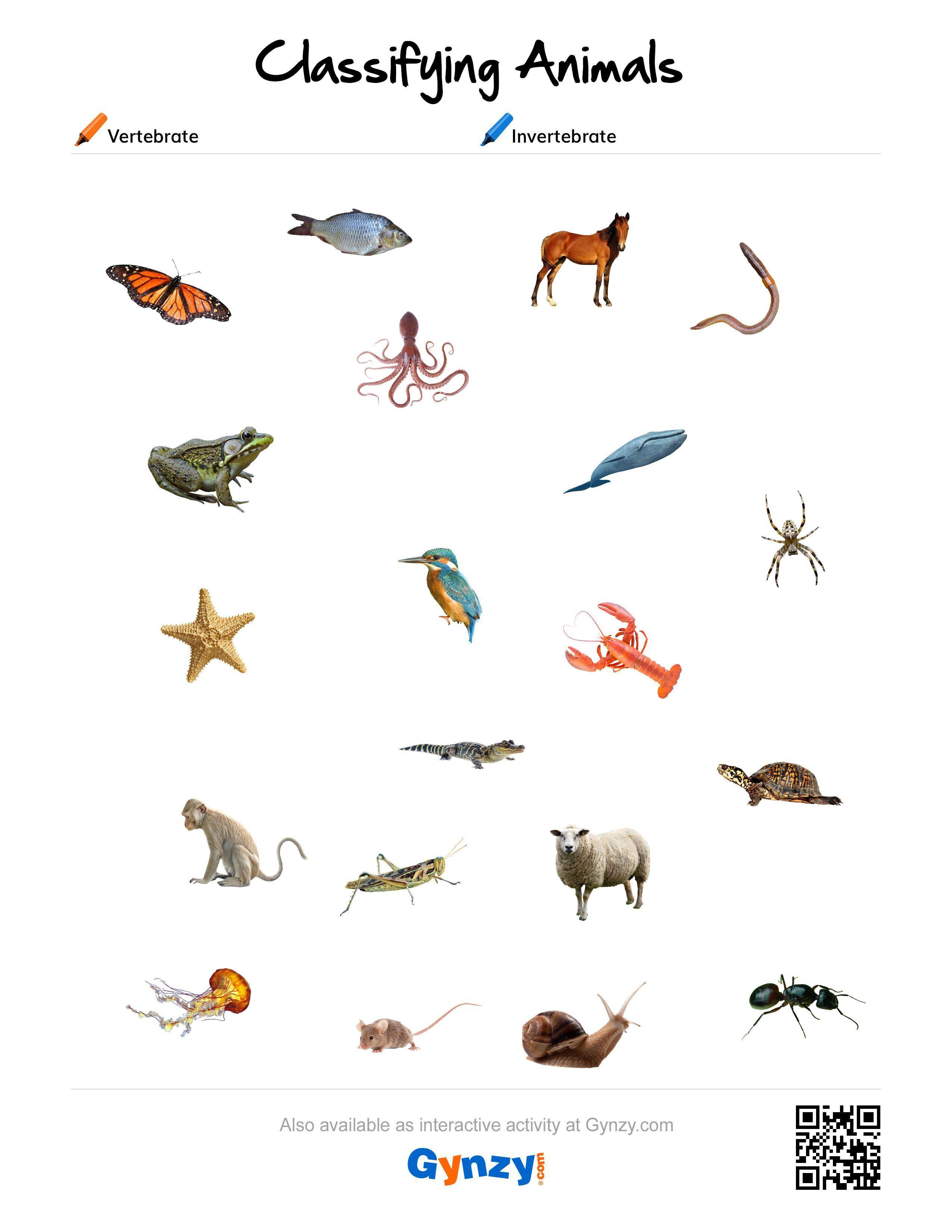 Pin By Teacher Timo On Classifying Animals Pinterest Worksheets