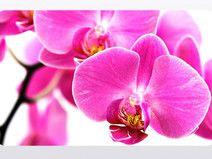 "Frühstücksbrettchen Motiv ""Orchidee"""