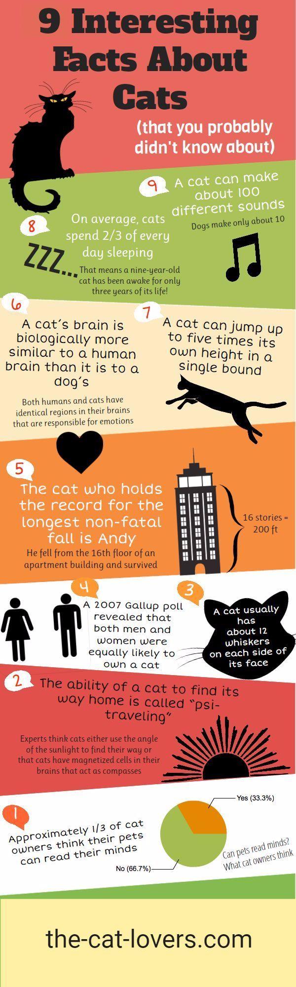 Cat Kittens Meow Cat Facts Kitten Care Fun Facts
