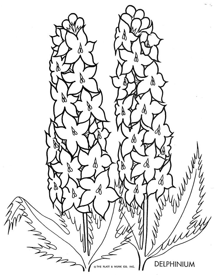 Flowers To Color Coloring Pages Flower Drawing