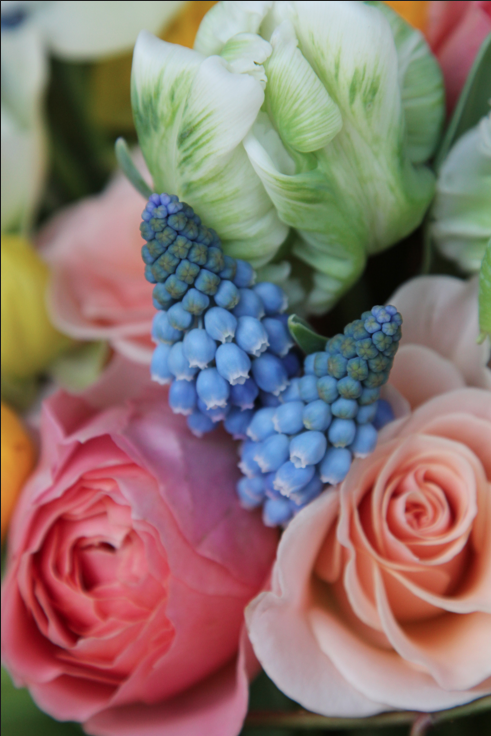 muscari, tulips, ranunculous and roses