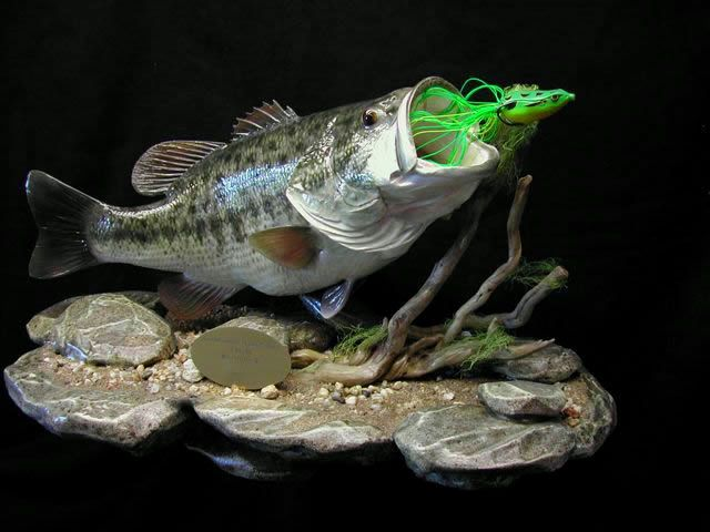 8 largemouth bass reproduction mount on rock base for for Largemouth bass fishing lures