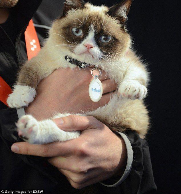 Watch Out Garfield! Internet Sensation Tardar Sauce The