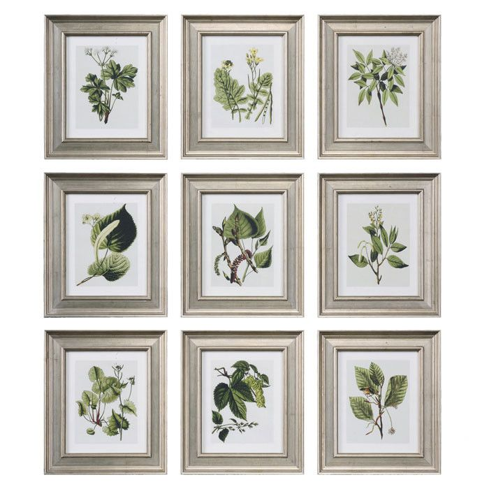9 Piece Botanical Study Framed Print Set- must remember to do this ...