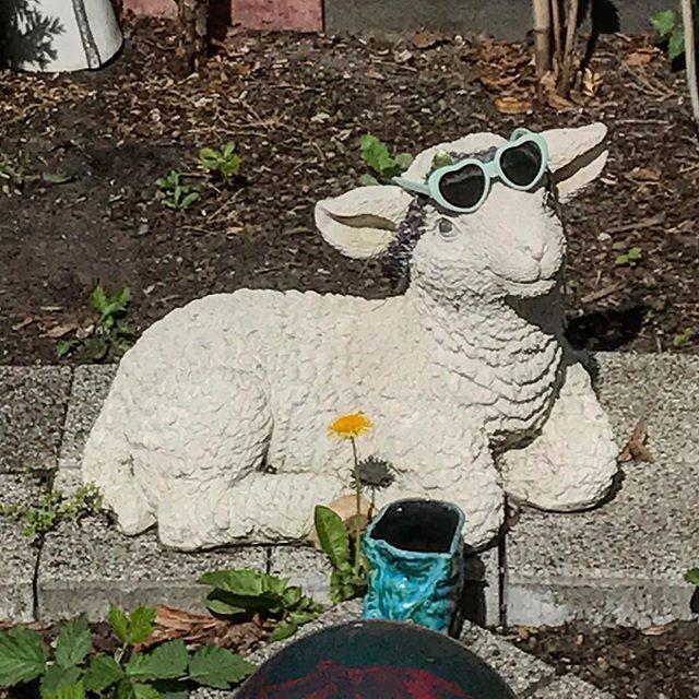 Gartendeko Berlin, i wear my sunglasses at night. #schaf #sheep #sunglasses, Design ideen
