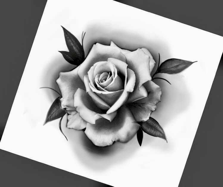 Pin By Marco Riccheti On Rose Sketch Rose Drawing Tattoo Realistic Rose Tattoo Rose Tattoos For Men