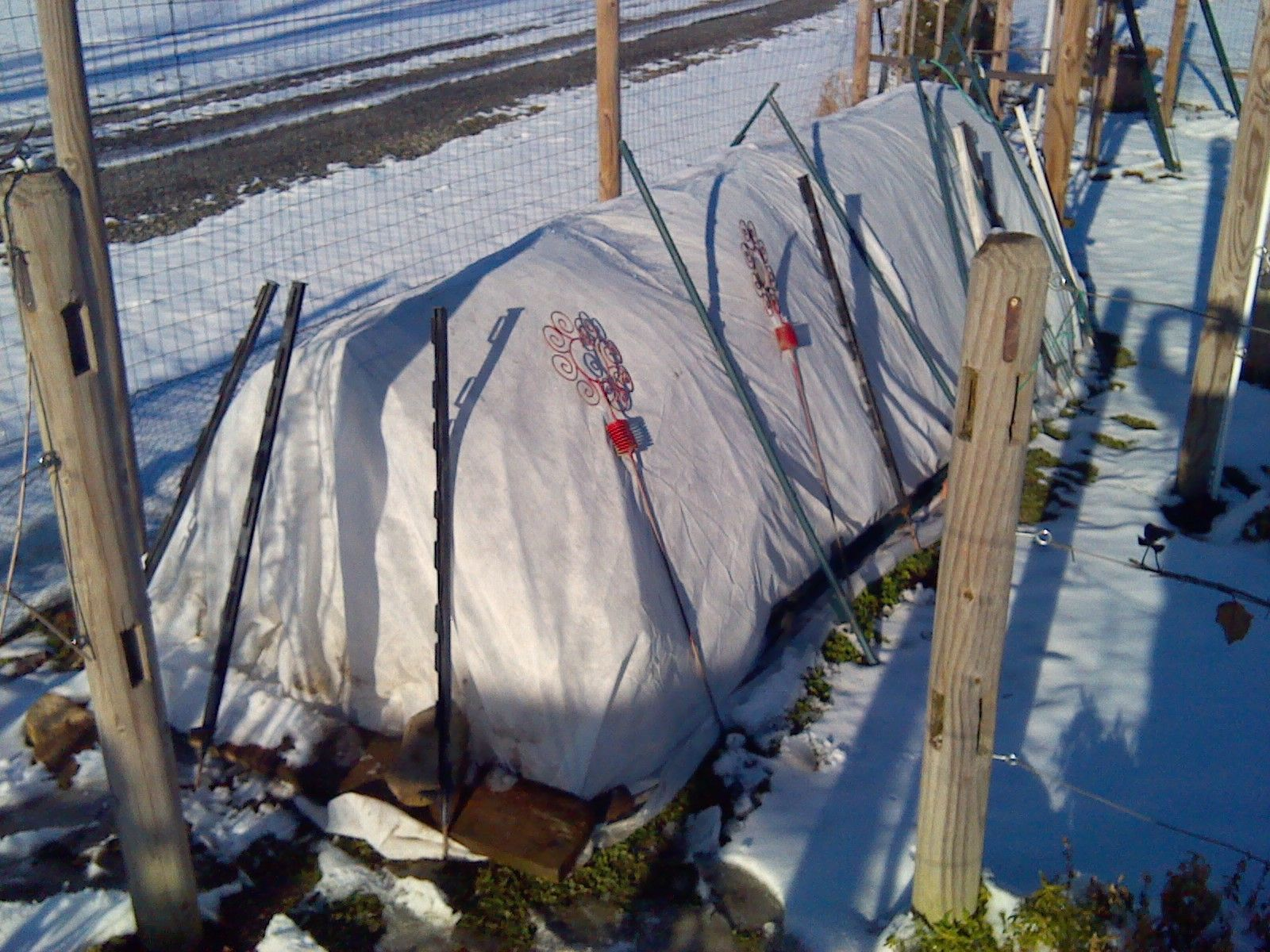 raised bed with 6 mil plastic and frost cloth over top of fence