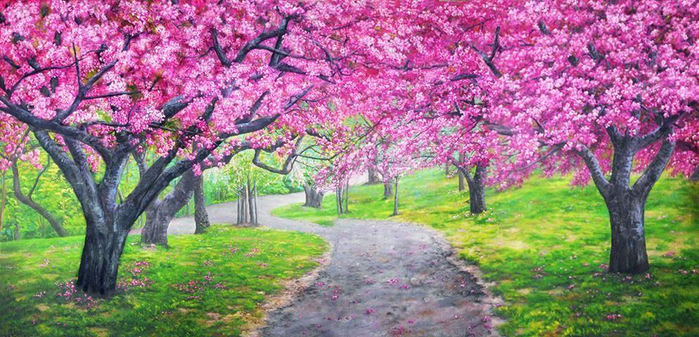Tatsuya Kurisu From Japan V Instagram Sakura Trees With Mt Fuji Cherry Blossoms Can Be Seen In Japan From The End Of Sakura Tree Japan Sakura Japan