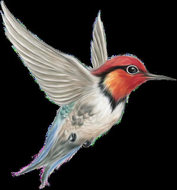 Aves Png Aves Pajaros Pintura De Pajaros Pajaros