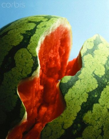 Exploding Watermelon Pictures