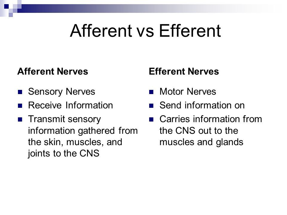 Afferent Nerves Sensory Receive Info Vs Efferent Nerves Motor