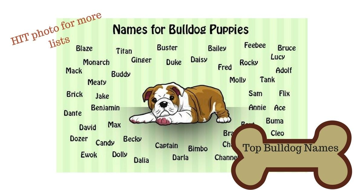 Popular English Bulldog Names Bulldog Names Puppy List Old