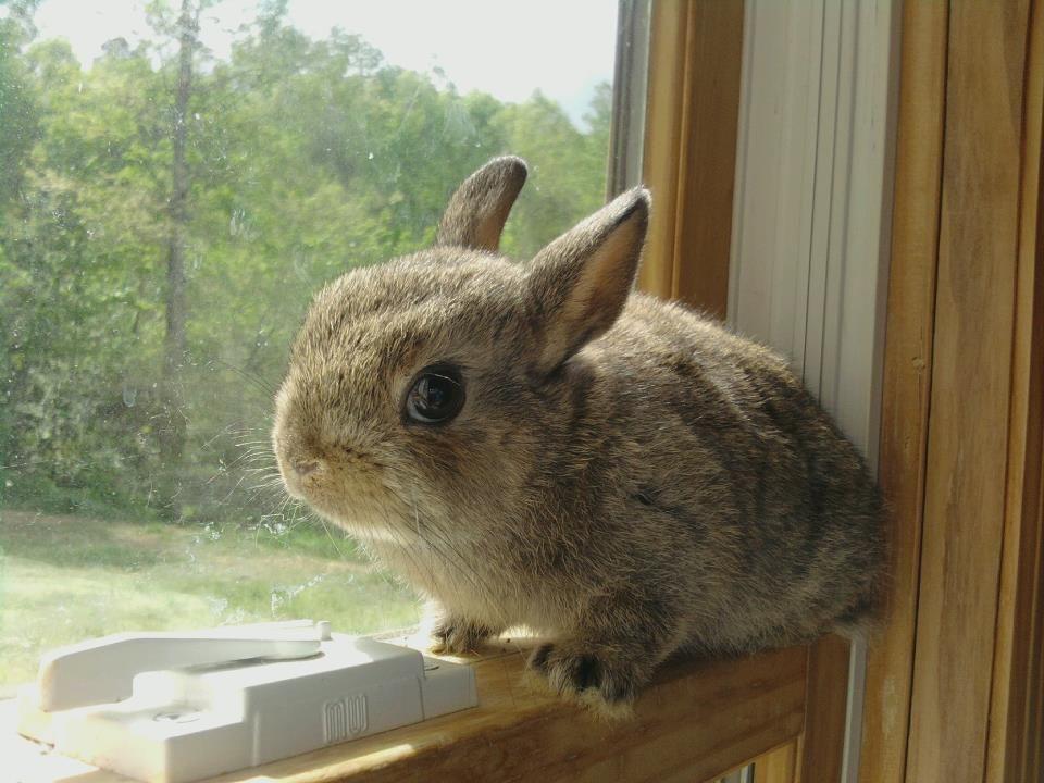 bunny named mimsy click http smallpetselect com timothy hay to